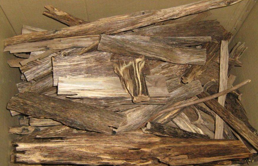 Pau-de-águila