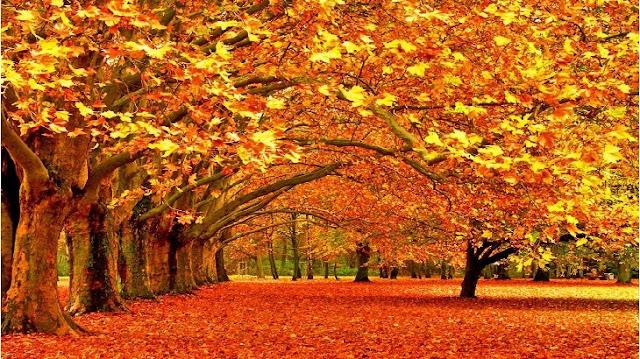 موضوع تعبير عن فصل الخريف