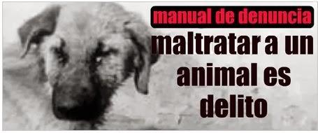 denuncia maltrato animal, es delito