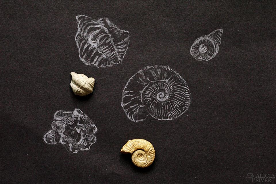 Teckningsutmaningen i juni, foto av Alicia Sivertsson. aliciasivert teckning teckningar teckna rita skiss skissa skapa skapande utmaning kreativitet skaparutmaning bloggutmaning månadsutmaning kreativ penna pennor illustration vitt på svart fossil fossiler