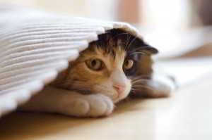 Foto Kucing yang Sedang Stress