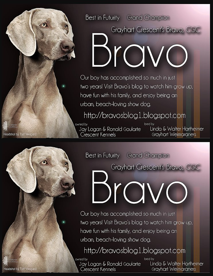 Grayhart Weimaraners: Bravo's Setup at the Golden Gate KC Show