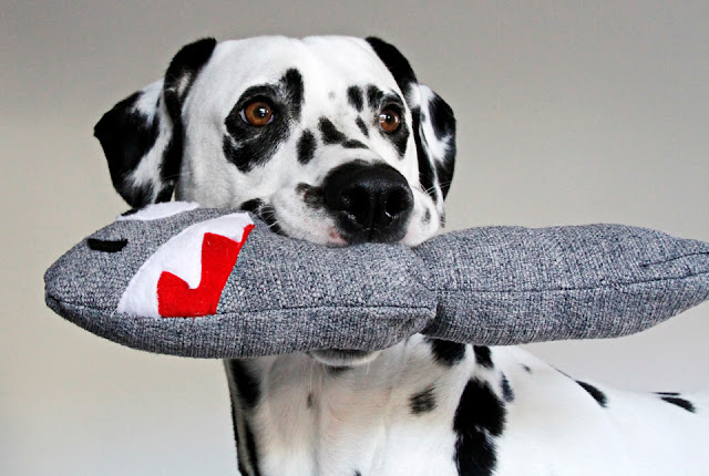Dalmatian dog with homemade shark dog toy
