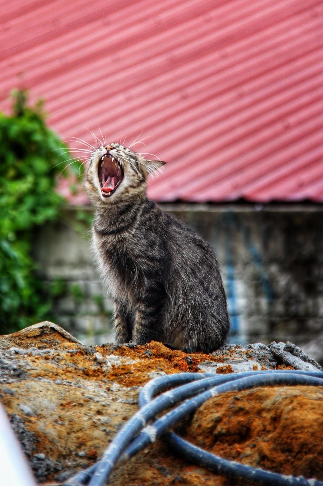 20 Koleksi Gambar Kucing Comel Bernama Tambi 14
