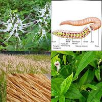 Obat Herbal Kencing Nanah Di Apotik