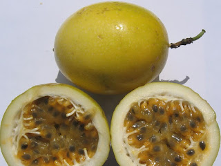 Voavanga Fruit Pictures