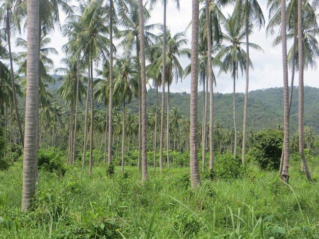 Остров Самуи Пальмы и горы