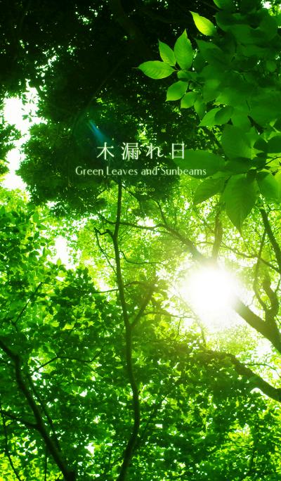 Green Leaves and Sunbeams