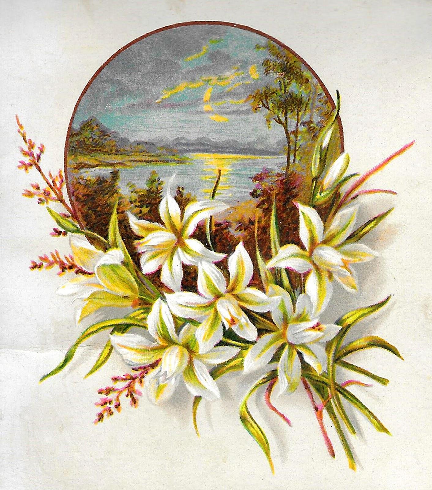 Antique Lily Flower Floral Greeting Design 1 412 1 600
