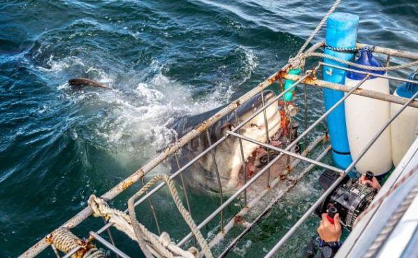 Έφτασαν ένα βήμα πριν τον θάνατο: Ψαράδες έπαθαν εγκεφαλικό όταν τους επιτέθηκε καρχαρίας