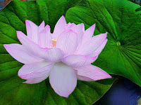 suree thai massage thai massage vejle