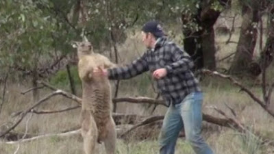Man punches a kangaroo to save his pet dog