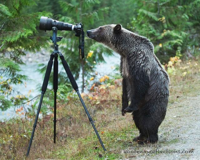 omorfos-kosmos.gr - 21 ζώα που θέλουν να γίνουν...φωτογράφοι! (Εικόνες)