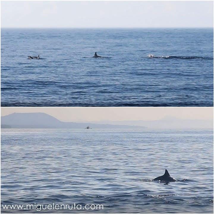 Delfines-Mar-Bohol