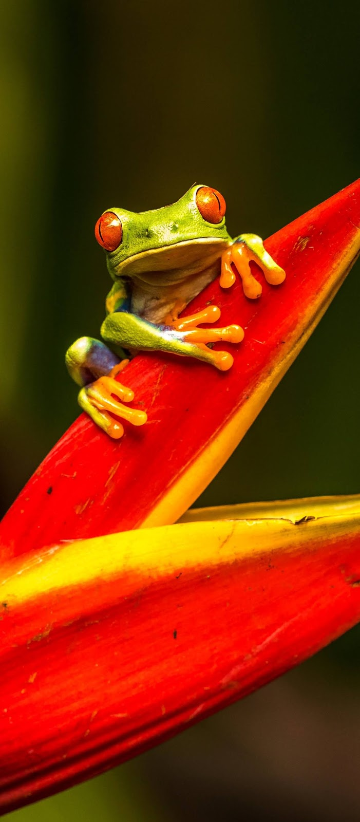 A tree frog on a plant.
