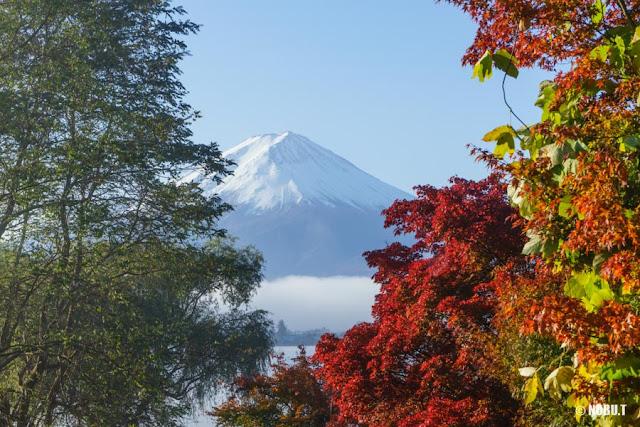 紅葉と富士山~河口湖