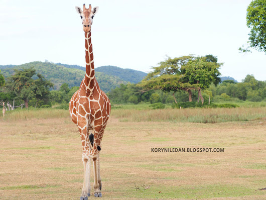 Project Pilipinas: Calauit Safari Park, a piece of Africa in the Philippines