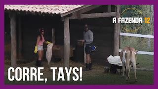 A Fazenda 12 - Tays Reis com medo da vaca - Fazendeiro se preocupa - Lidi aconselha Luiza