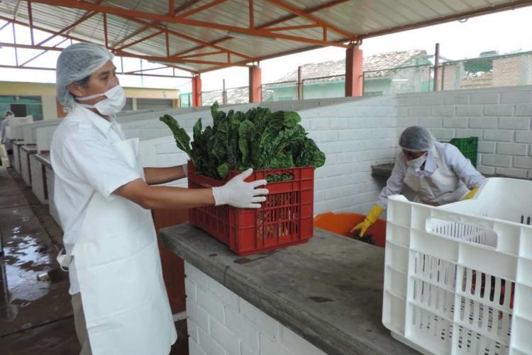 QALI WARMA: Programa Social lanza iniciativa piloto «Escuelas Tambinas Saludables» en la región Junín - www.qaliwarma.gob.pe