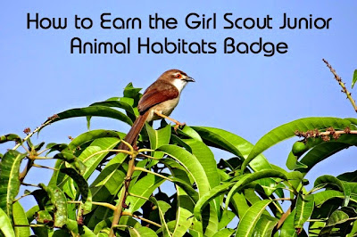 How to Earn the Junior Girl Scout Animal Habitats Badge