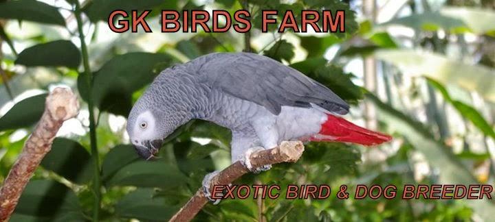 GK BIRDS FARMS