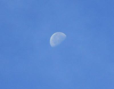 台風一過、好天の朝の月