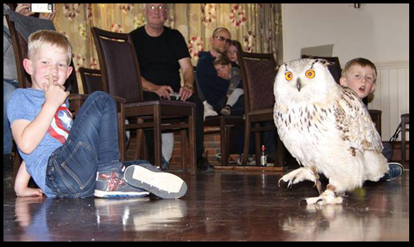 South Wilts Falconry