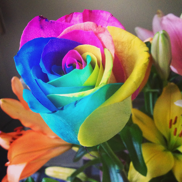 rainbow-rose-photojenn