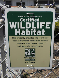 Everyday Green: Turning Your Yard Into a Wildlife Habitat