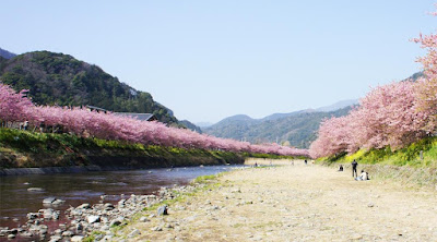 Tempat Wisata di Jepang yang Paling Pas untuk Melihat Bunga Sakura