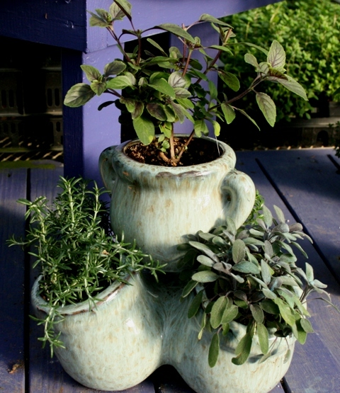 The flower bin how to grow herbs indoors this winter - Herbs that can be grown indoors ...