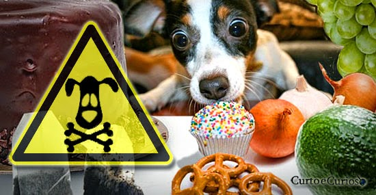 10 alimentos que podem matar seu cachorro e você nem desconfiava