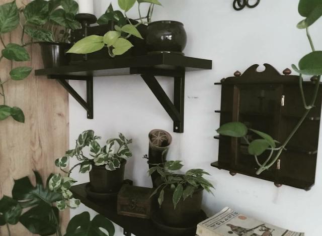 roślinna aranżacja mieszkanie