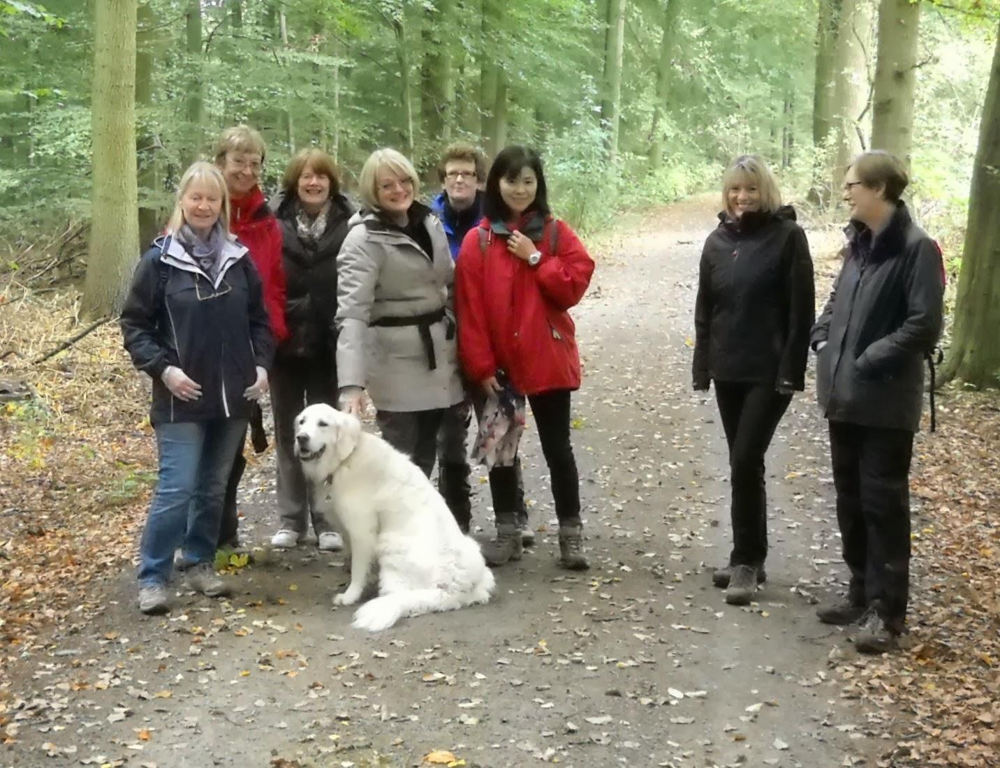 The WIC Walker: Charlotte's walk in Groenendal