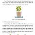 Khảo sát ảnh hưởng của chất điều hòa sinh trưởng lên cây dâu tây Fragaria vesca L. trồng thủy canh trong nhà kính