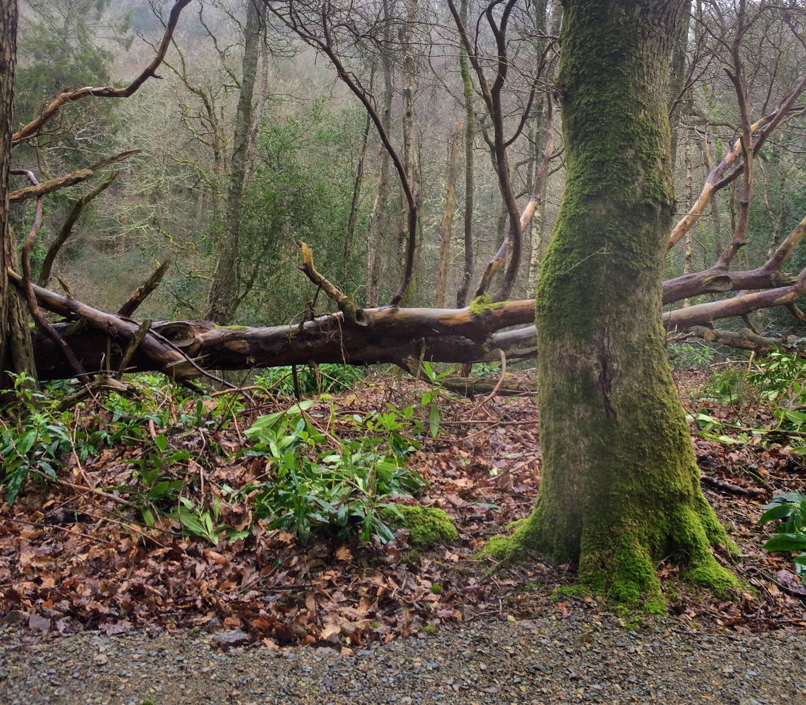 ", ""Survival"" at Colby Woodland Gardens #Pembrokeshire"