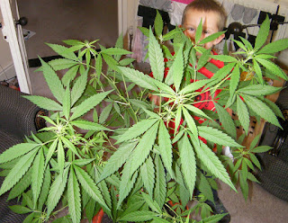 home grown cannabis plant and kid