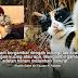 Haram Bergambar Dengan Kucing - Ulama Saudi