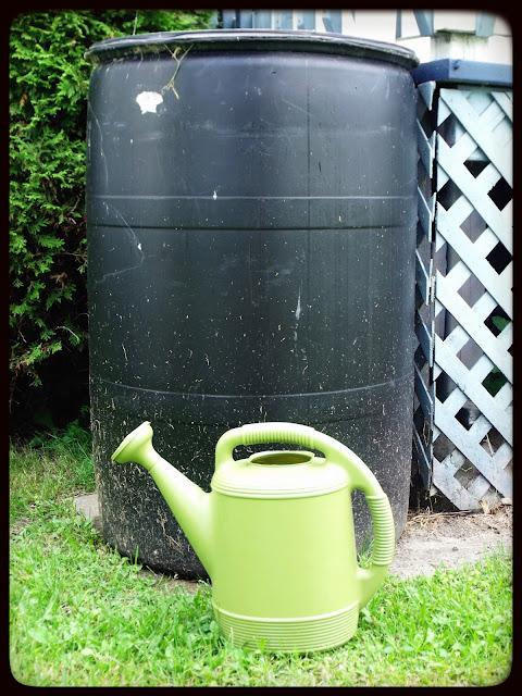 gaspillage eau baril rétention retention pluie marguerite verte blog arrosage écologique