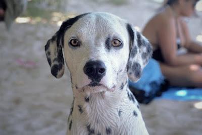 Dog Lovers And Detractors Seek Common Ground