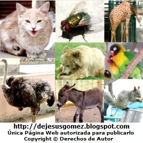 Imagen de animales de Jesus Gómez