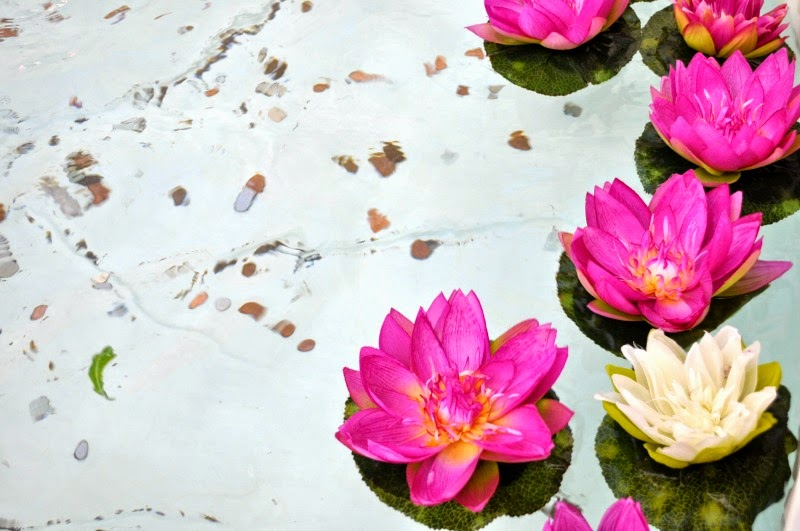 Floating pink water flowers at the ideal home show