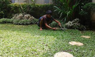 Tukang Perawatan Taman di Gading Serpong,Jasa Perawatan Taman di Gading Serpong Jasa Renovasi Taman di Gading Serpong