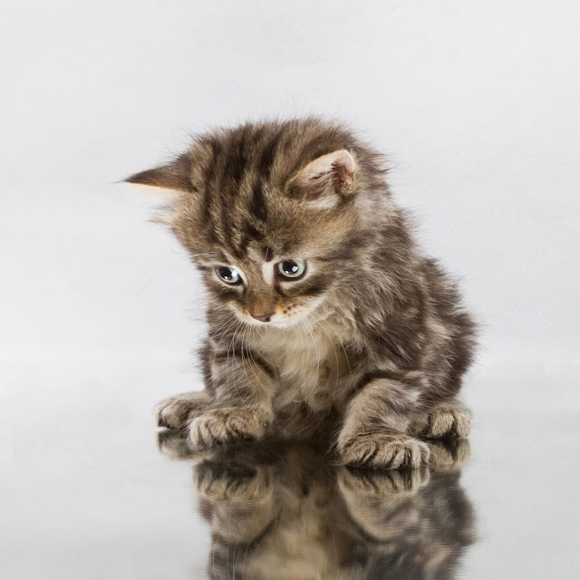 Mirror cat by crsan from flickr (CC-BY)