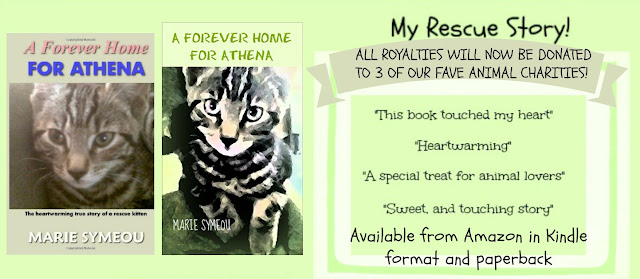 A Forever Home For Athena