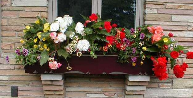 цветы-на-даче