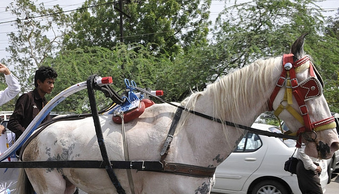 horse-cart-tonga-race