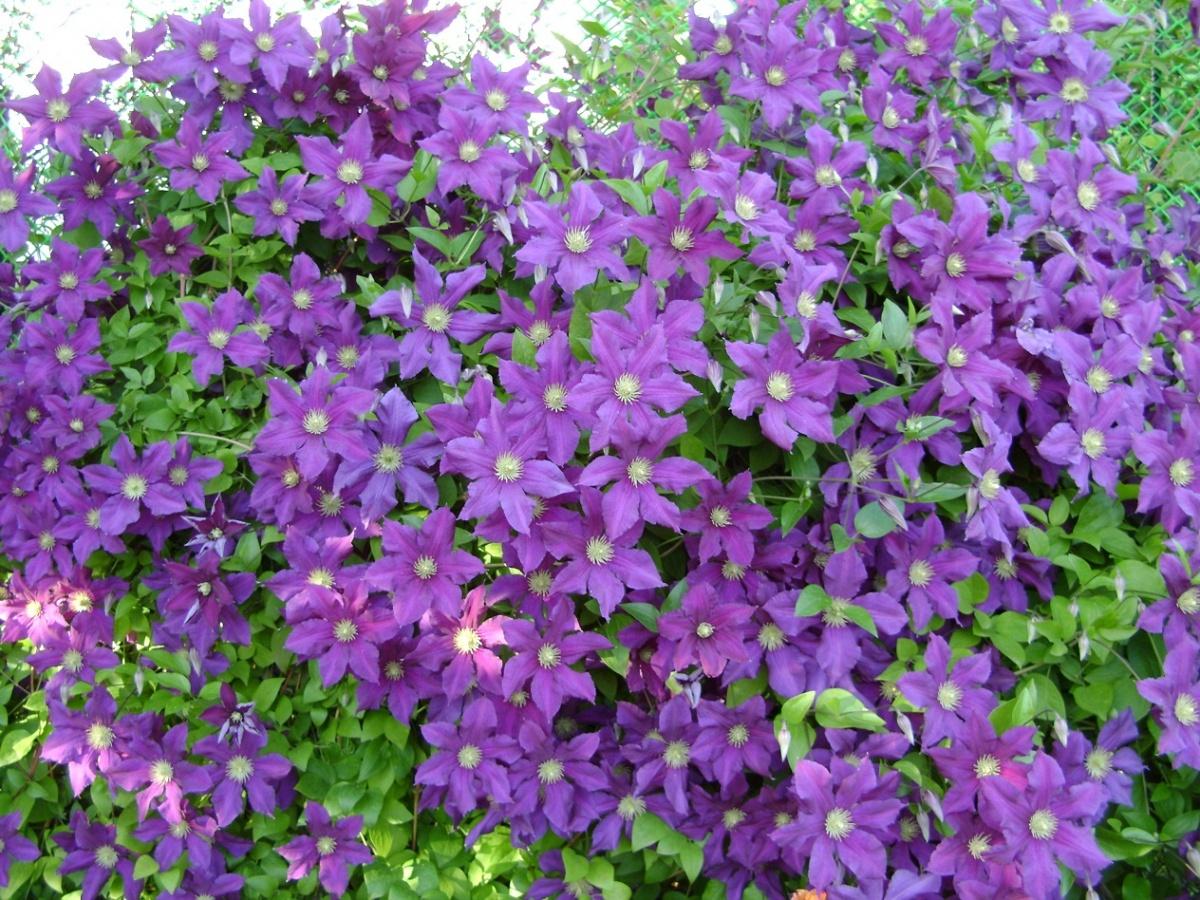 Цветы садовые фото на г
