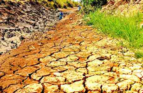 Lại đói: Cảnh báo mất an ninh lương thực tại Dimbabue