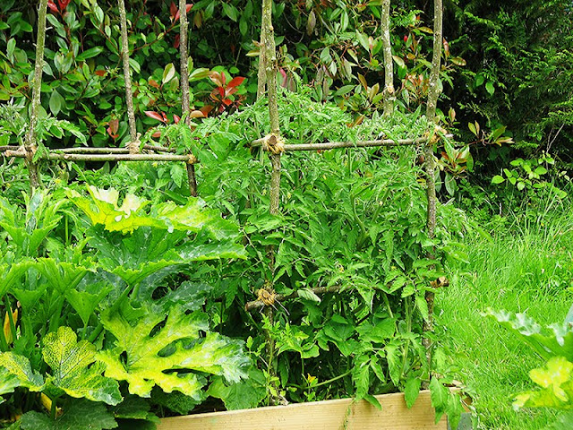Tuteurs pour tomates bio
